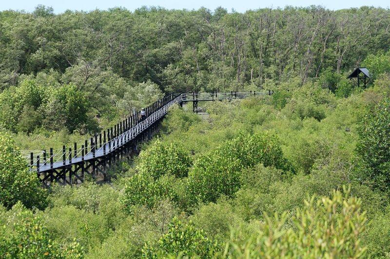 春汶里府紅樹林保育暨自然研究中心