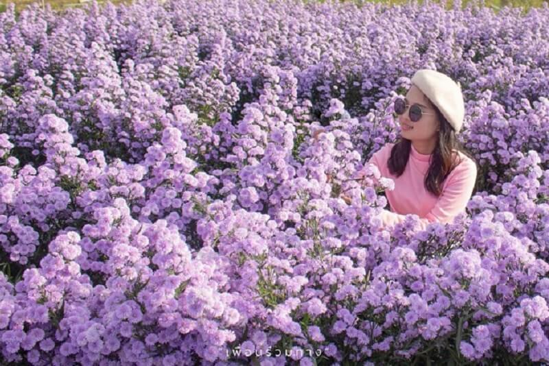 清邁花卉盛開:三座美麗花園農場讓您生活煥然一新